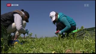 Video «Bundesrat aktiviert Ventil-Klausel » abspielen