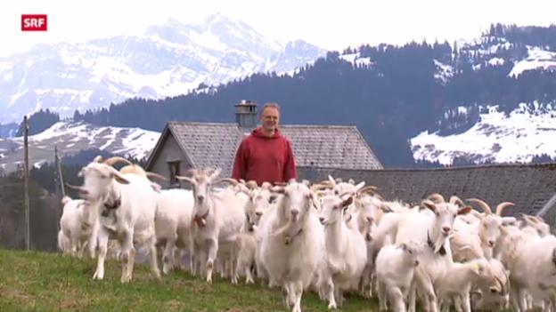 Video «Kaschmirwolle «Made im Toggenburg»» abspielen