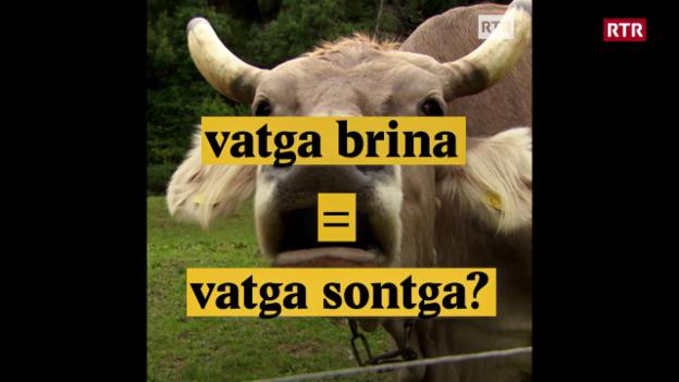 Laschar ir video «Vatga brina = vatga sontga?»