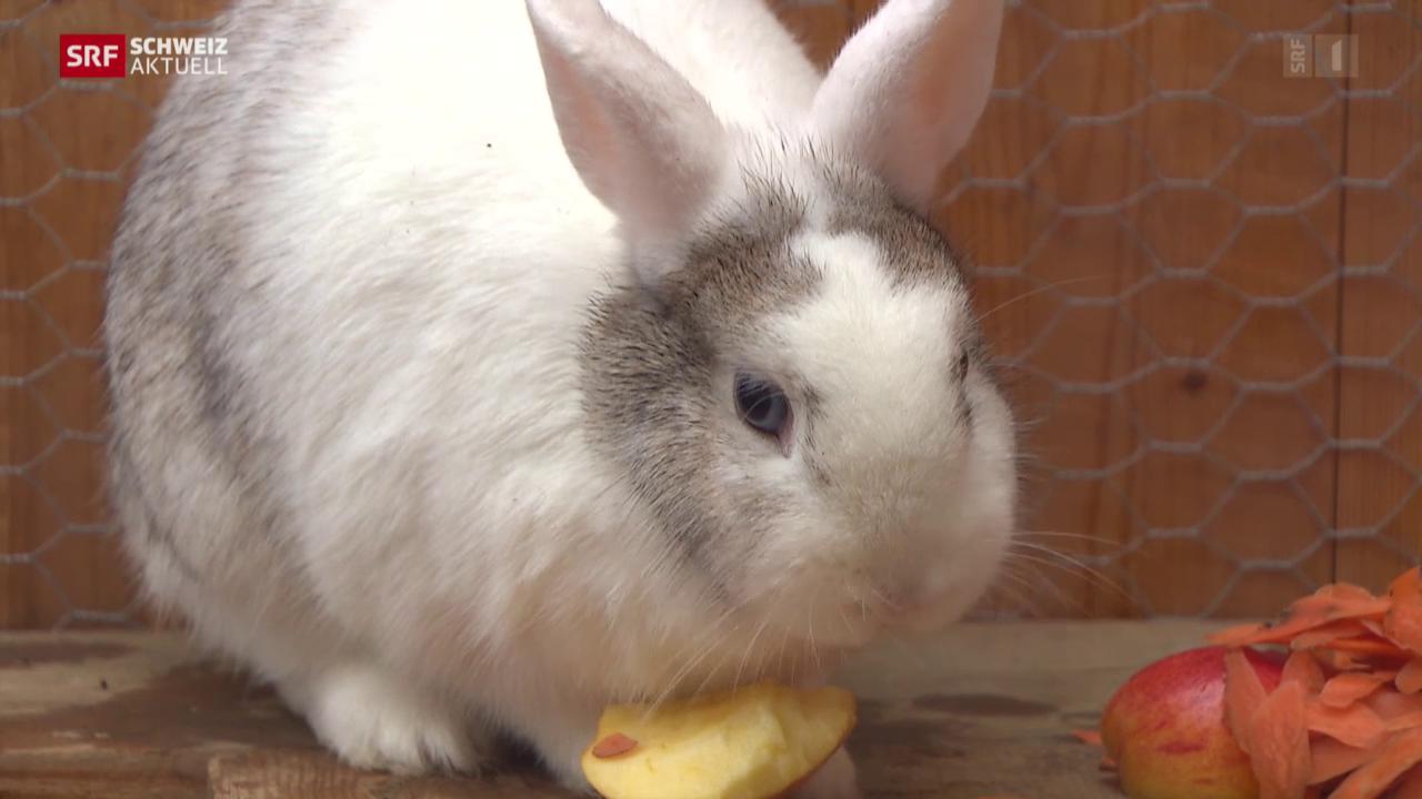 Kaninchenpest