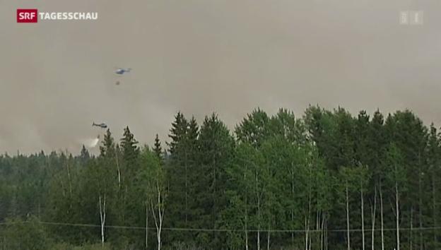 Video «Feuerinferno in Schweden» abspielen
