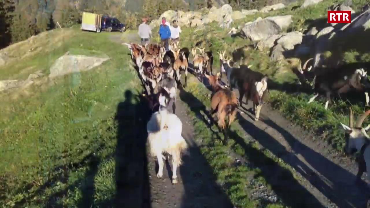 Stgargiada da l'Alp Puzzetta
