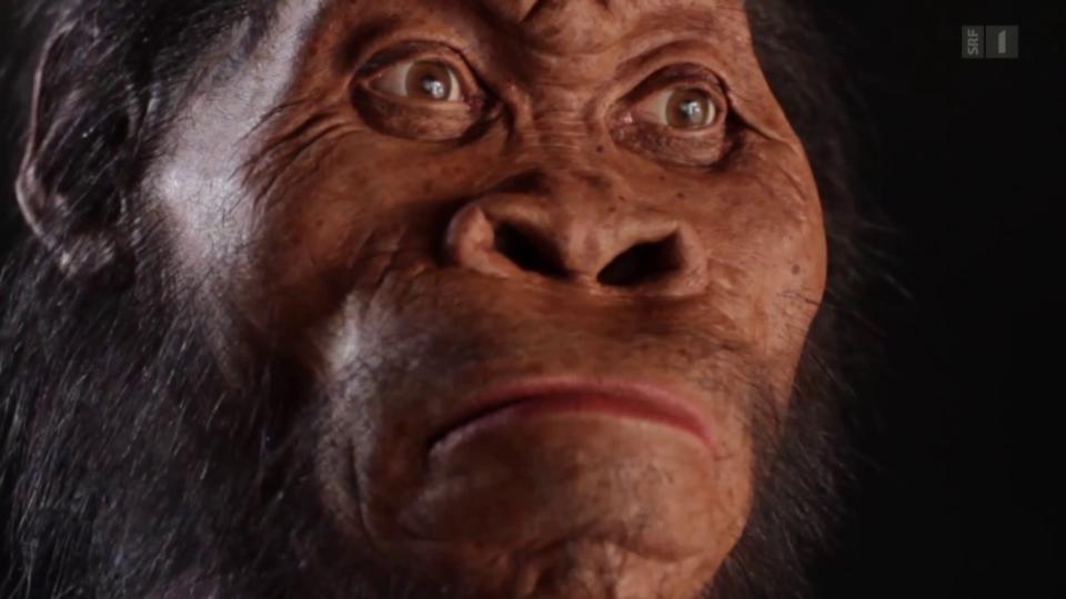 Unsere Vorfahren - Was steckt vom Urmenschen heute noch in uns?