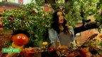 Video «Die Sesamstrasse und seine Stargäste» abspielen