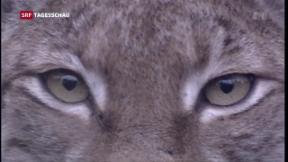 Video «Ständerat für Revision des Jagdgesetzes» abspielen