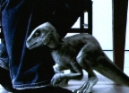 Video «Dinos als Haustiere» abspielen