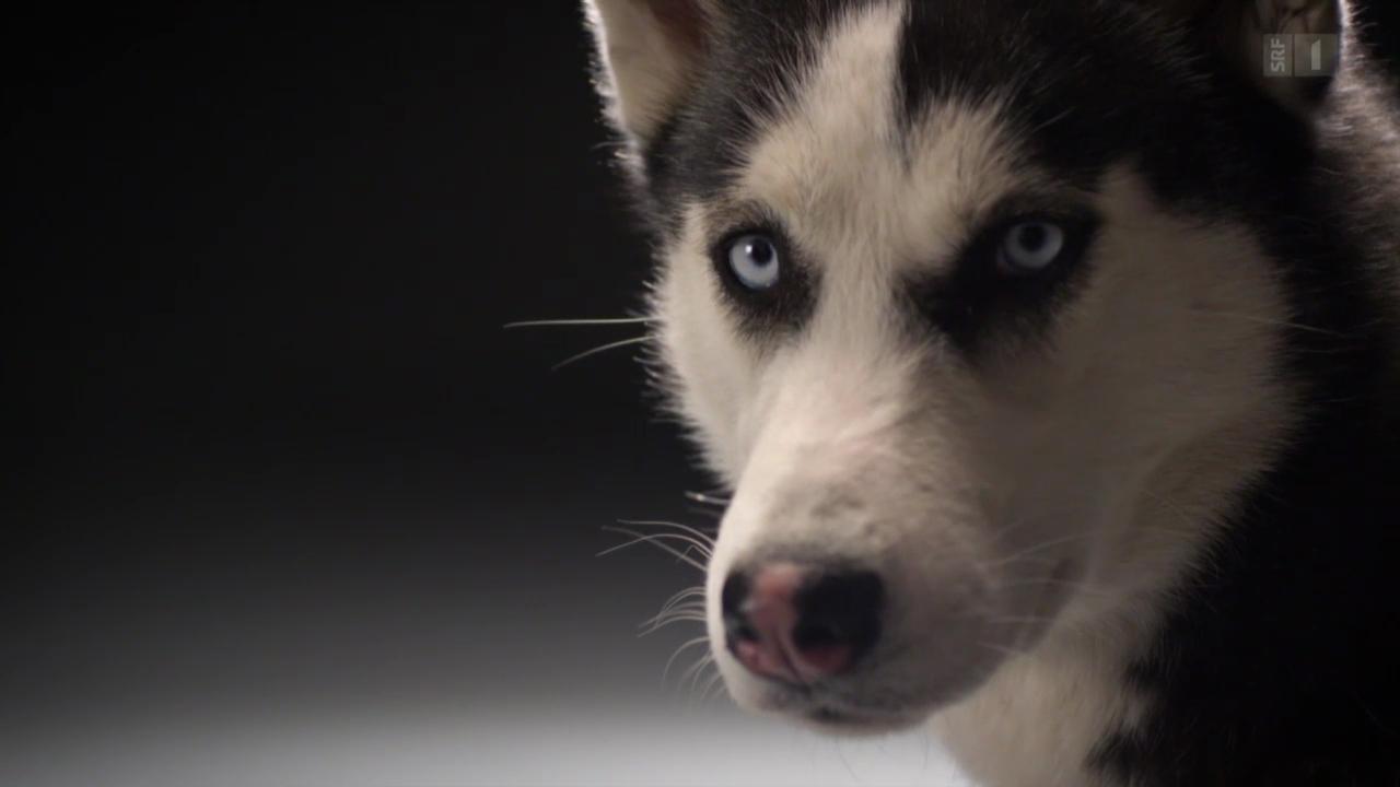 Faszination Hund