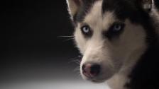 Video «Faszination Hund» abspielen