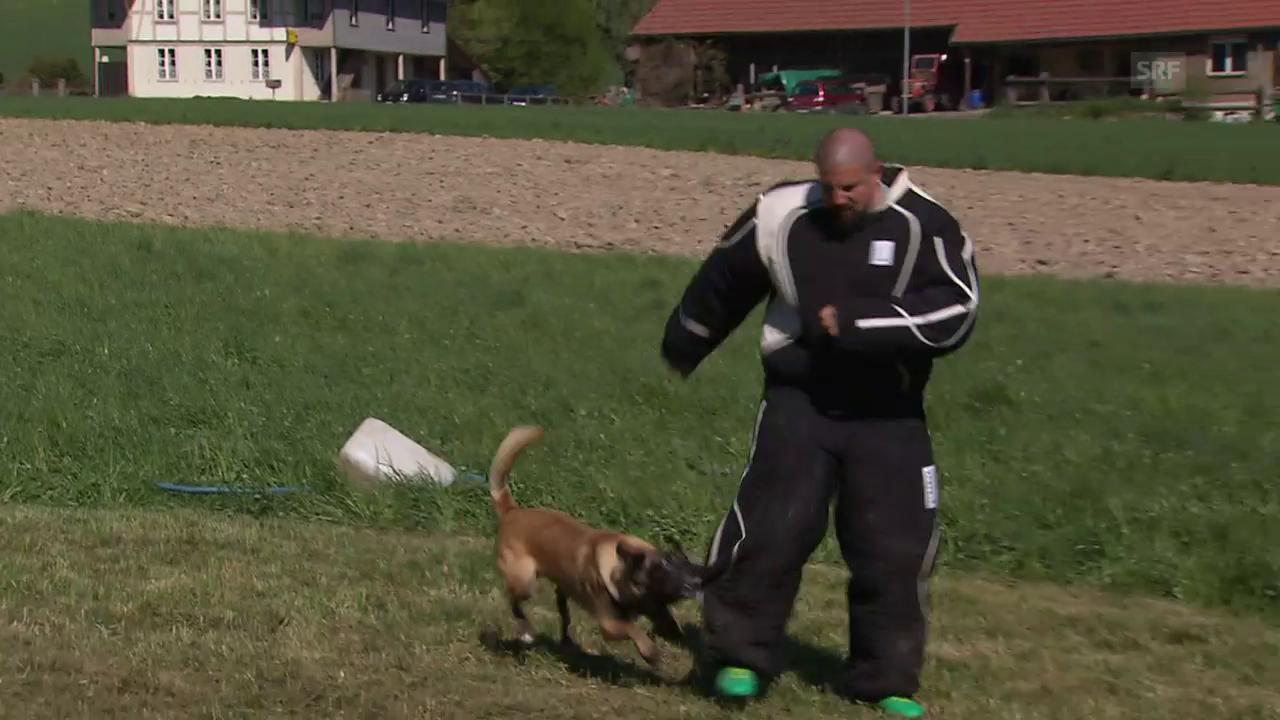 Polizeihundeführer-Schweizermeisterschaft Lüterkofen