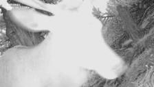 Video «Wild Cam: Hirschwechsel» abspielen