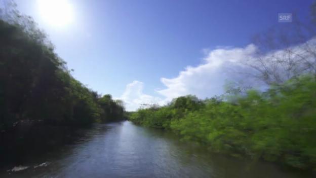 Video «Der WM-Ort Manaus» abspielen