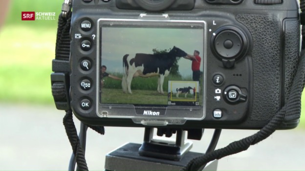 Video «Professioneller Fotograf für Kühe» abspielen