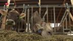 Video «Gras statt Kraftfutter» abspielen