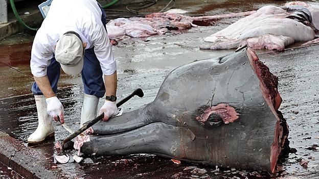 Wird sich Japan an Walfanverbot halten?
