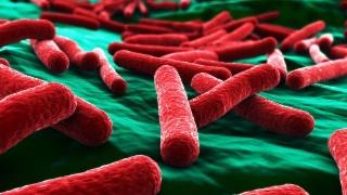 Video «Resistente Keime, Transplantationsgesetz, Krücken, «Hallo Puls»» abspielen
