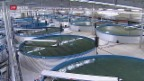 Video ««Die Idee»: Fische züchten im Gotthard-Bergwasser» abspielen