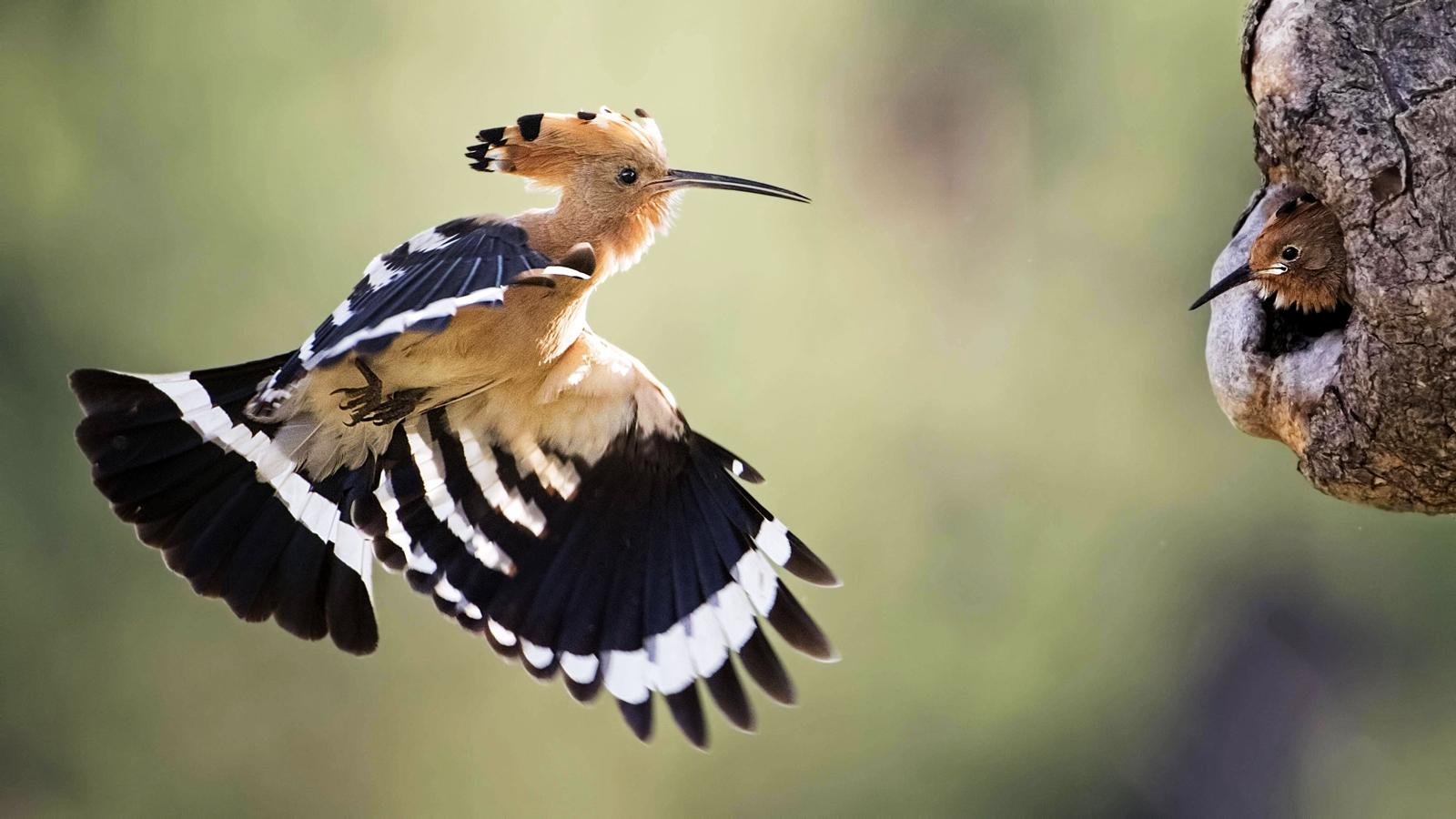 Vogelzüge erstaunen immer von neuem