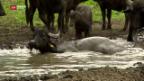 Video «Land unter im Grossen Moos» abspielen