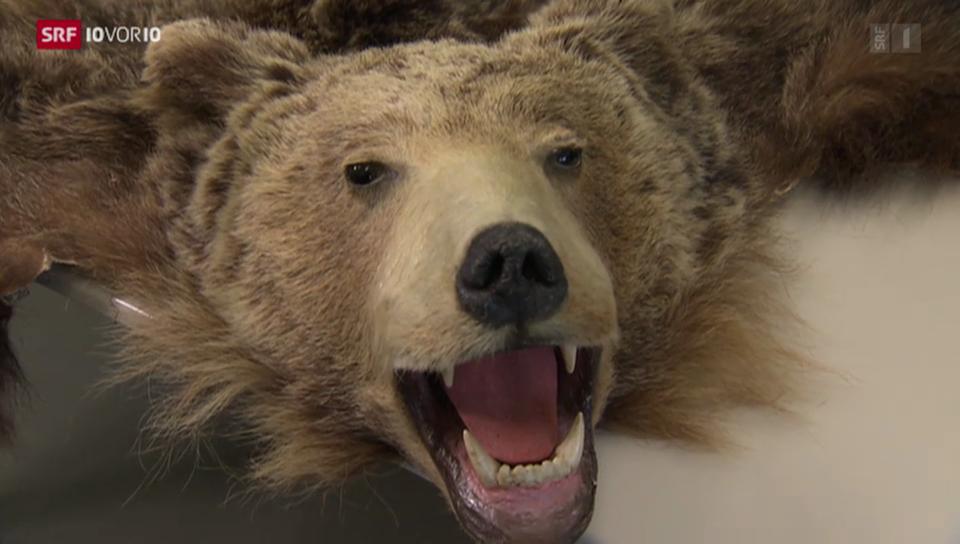 Bären auch in Südtirol wenig geliebt