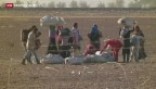 Video «Syrische Flüchtlinge zum Kampf gegen IS aufgerufen» abspielen