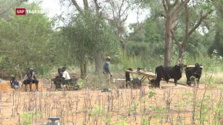 Video «Cassis setzt neue Akzente in der Entwicklungshilfe» abspielen