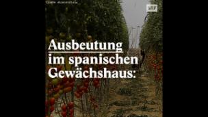 Video «Ausbeutung im spanischen Gewächshaus» abspielen