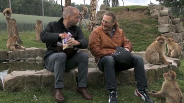 Video «Die «Töfflibuebe» im Zoo» abspielen