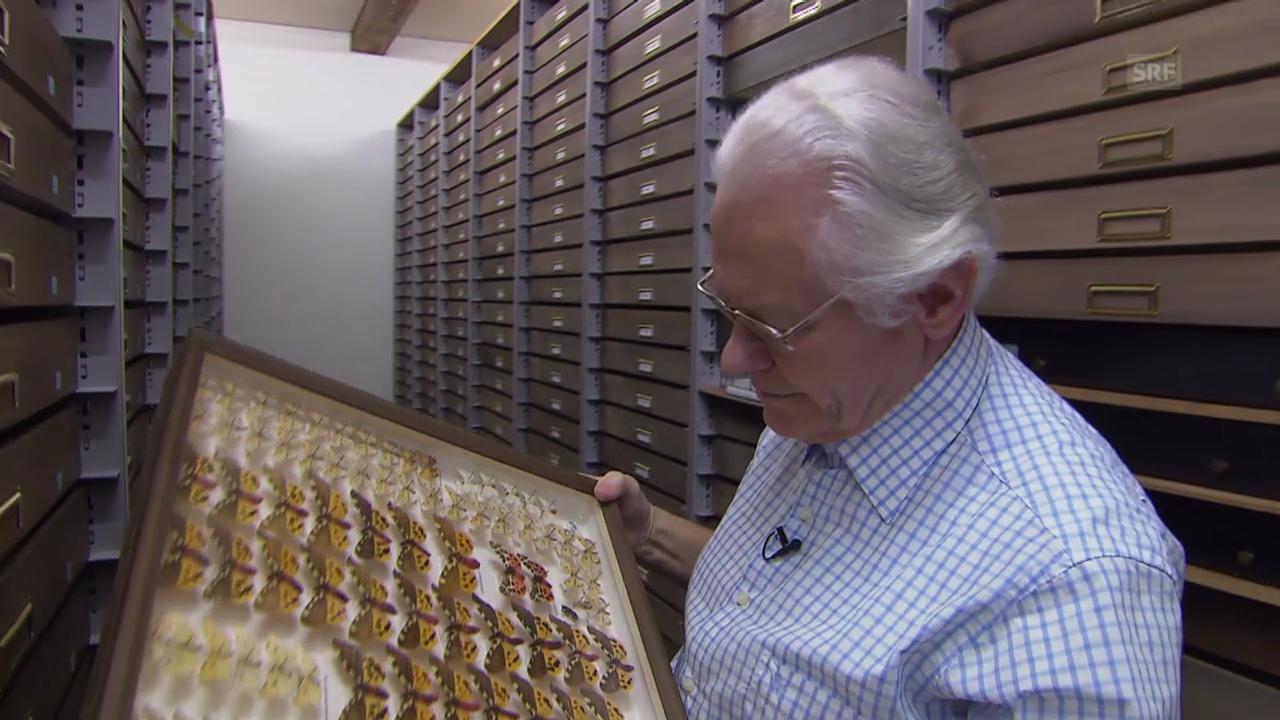 «Einstein» entdeckt – Schmetterlinge