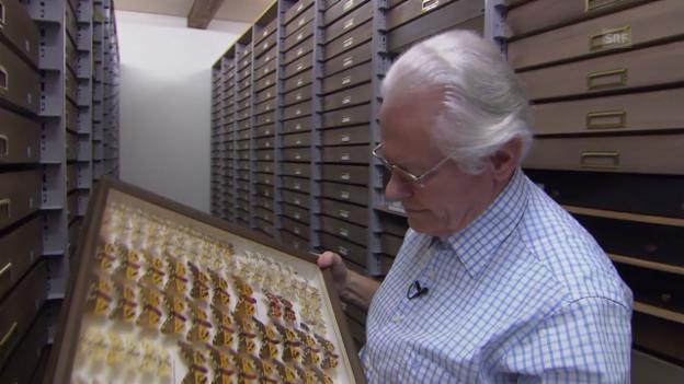 Video ««Einstein» entdeckt – Schmetterlinge» abspielen