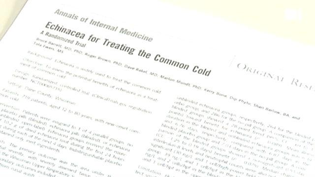 Echinacea - Wirkungslos bei Erkältung
