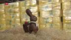 Video «Holzwolle für das Osternest» abspielen