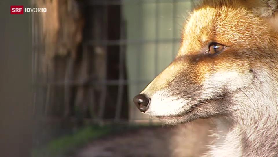 Protest gegen Fuchsjagd