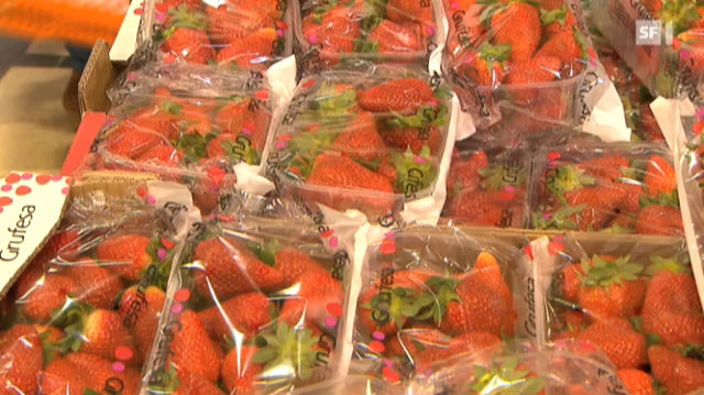 Billig-Erdbeeren auf Kosten der Umwelt