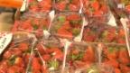 Video «Billig-Erdbeeren auf Kosten der Umwelt» abspielen