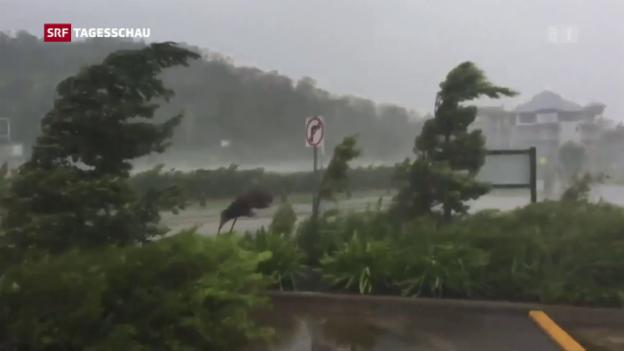 Video «Zyklon «Debbie» fegt über Australien» abspielen