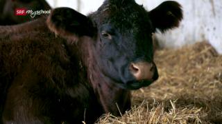 Video «Fleischlos – Mit oder ohne Fleisch in die Zukunft?» abspielen