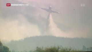 Video «Waldbrände in Chile » abspielen