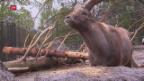 Video «Der Tierversteher verlässt den Tierpark» abspielen