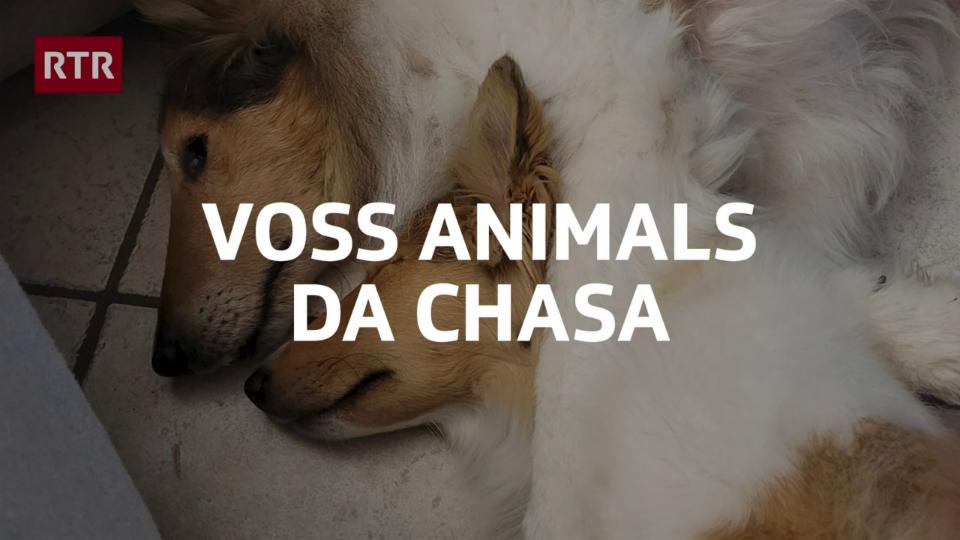 Voss animals da chasa