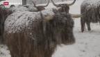 Video «Schweizer Armee fliegt tonnenweise Heu in Tessiner Bergtal» abspielen