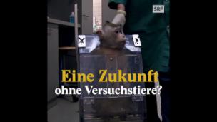 Video «Haben Tierversuche bald ausgedient?» abspielen