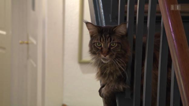 Video «Haustiere» abspielen