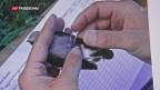 Video «Zugvogelforschung mit High-Tech» abspielen