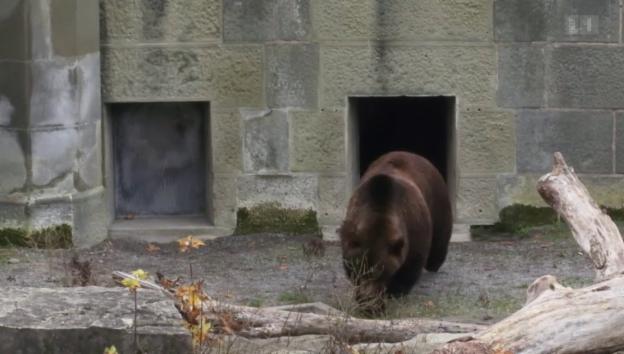 Video «Berner Bären» abspielen