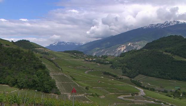 Video «Schwere Vorwürfe gegen Walliser Weinbauern» abspielen