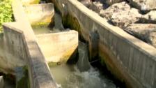 Video «Wenn Fische Treppen steigen» abspielen