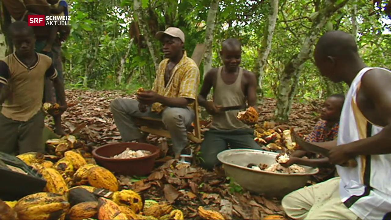 Schokoladeproduzenten in der Pflicht