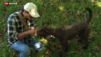Video «Mit Hunden auf Trüffel-Forschung» abspielen