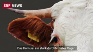 Video «Alle streiten über das Horn – das steckt dahinter» abspielen
