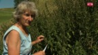 Laschar ir video «Gisula Tscharner – la terra pli datiers ch'il tschiel»